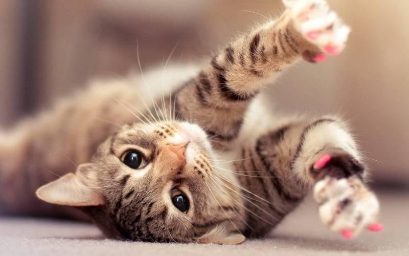 poze pisici (164)