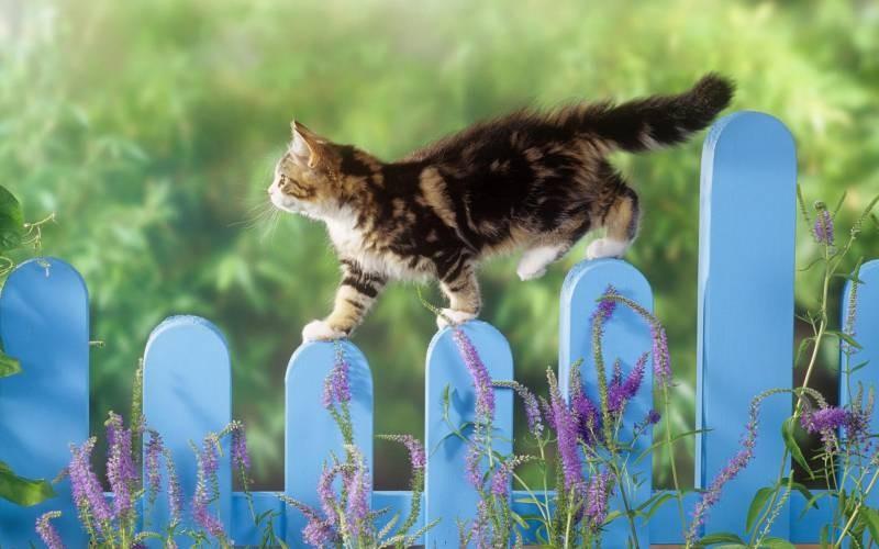 poze pisici (17)