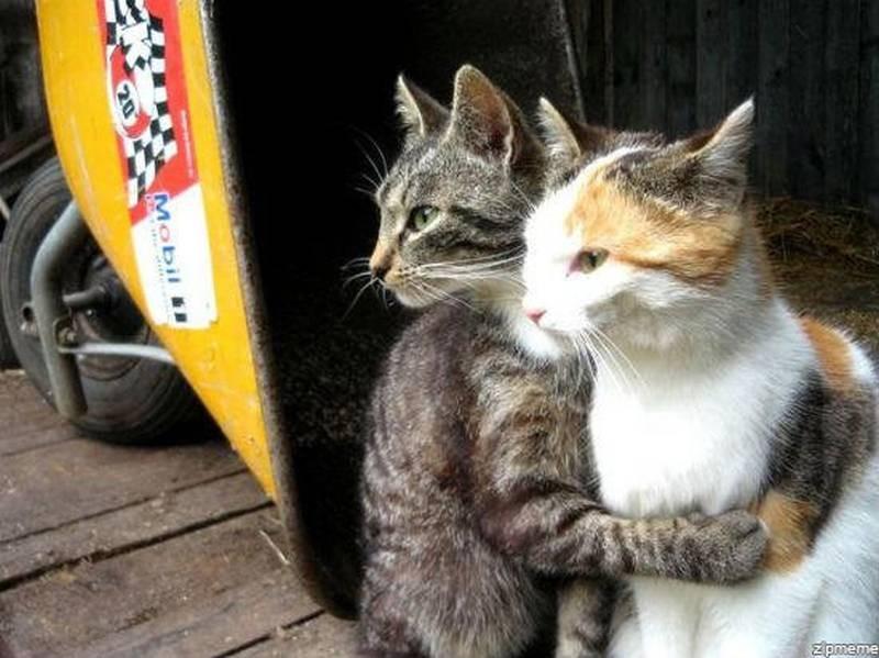 poze pisici (170)