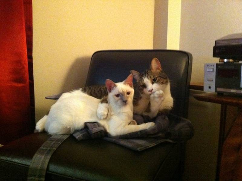 poze pisici (171)