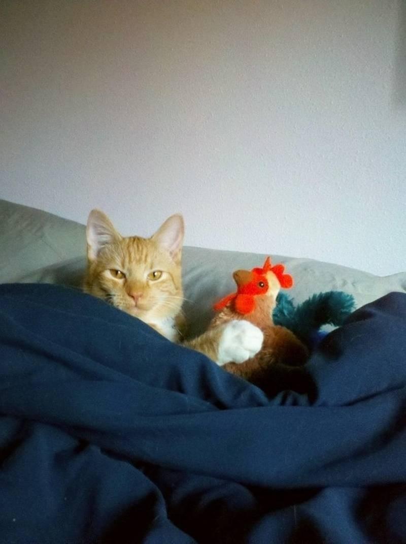 poze pisici (172)