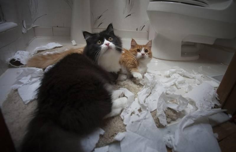 poze pisici (174)