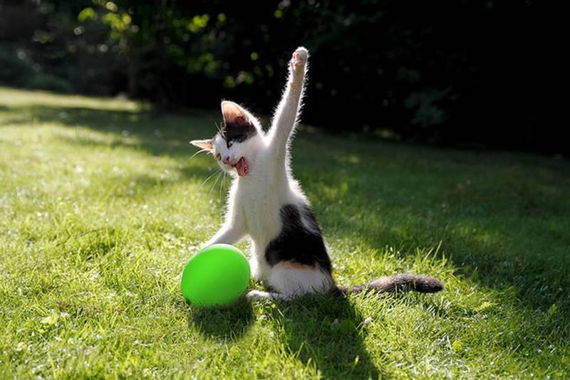 poze pisici (176)