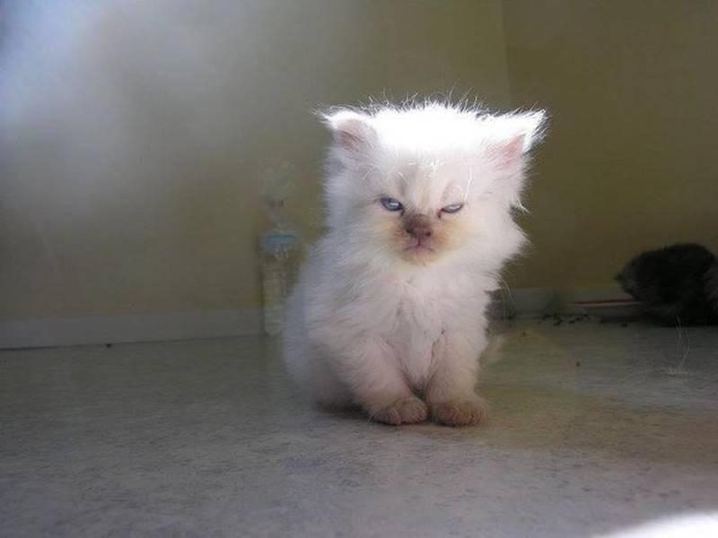 poze pisici (178)