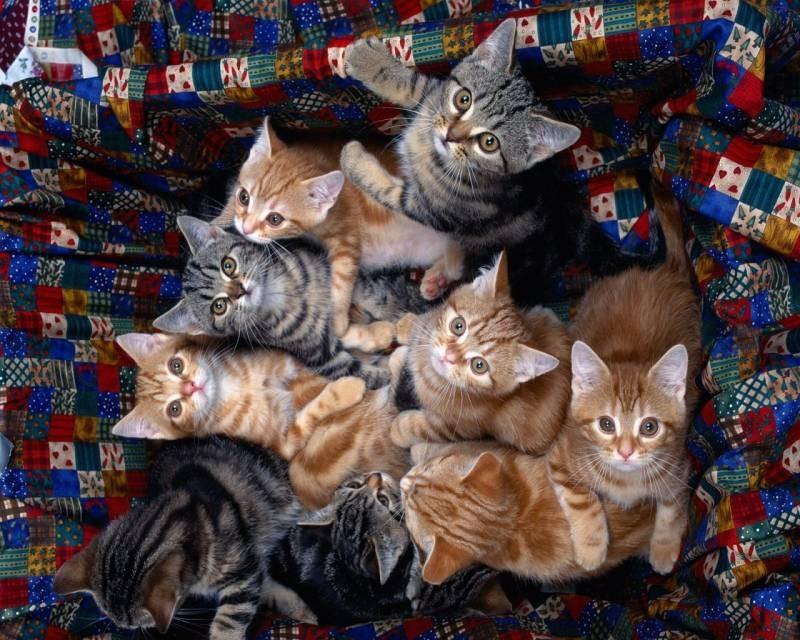 poze pisici (18)