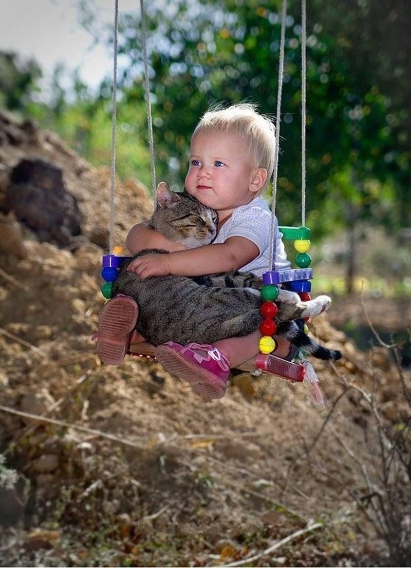 poze pisici (181)