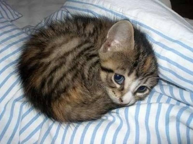 poze pisici (182)