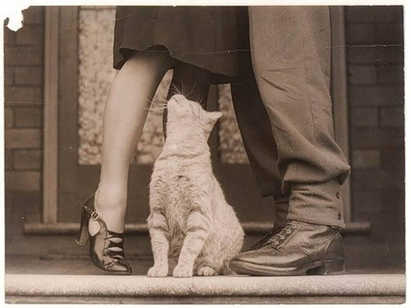 poze pisici (187)