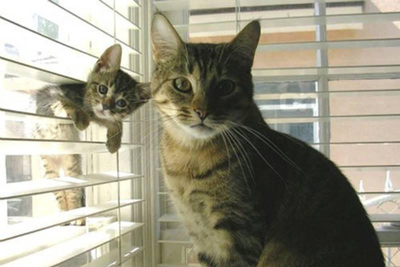 poze pisici (189)
