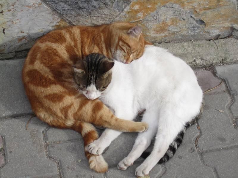 poze pisici (19)