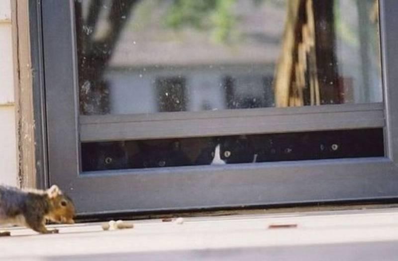 poze pisici (194)