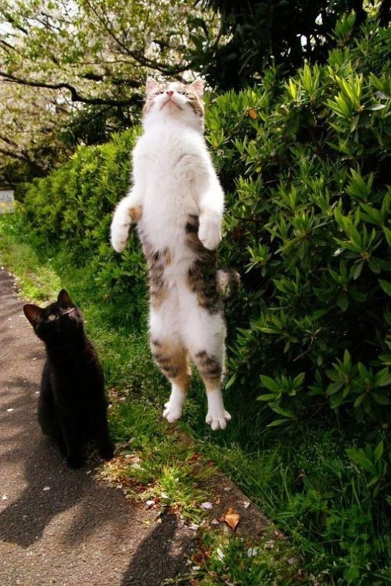 poze pisici (195)