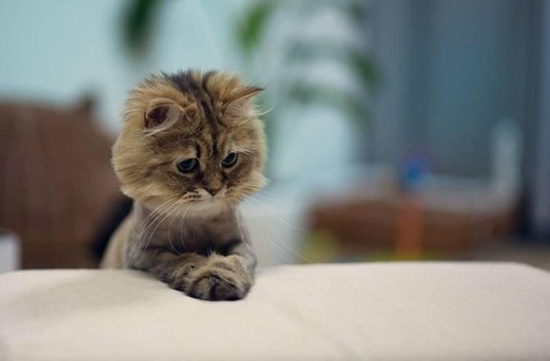 poze pisici (197)