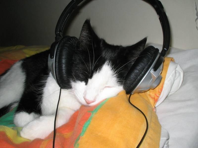 poze pisici (2)