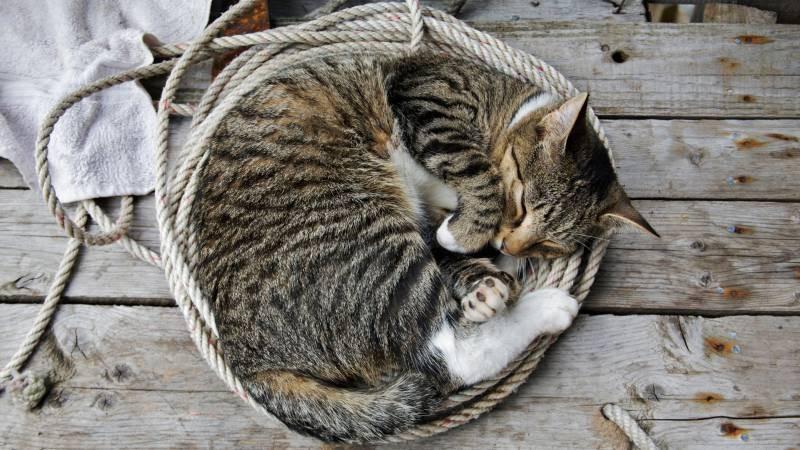 poze pisici (20)