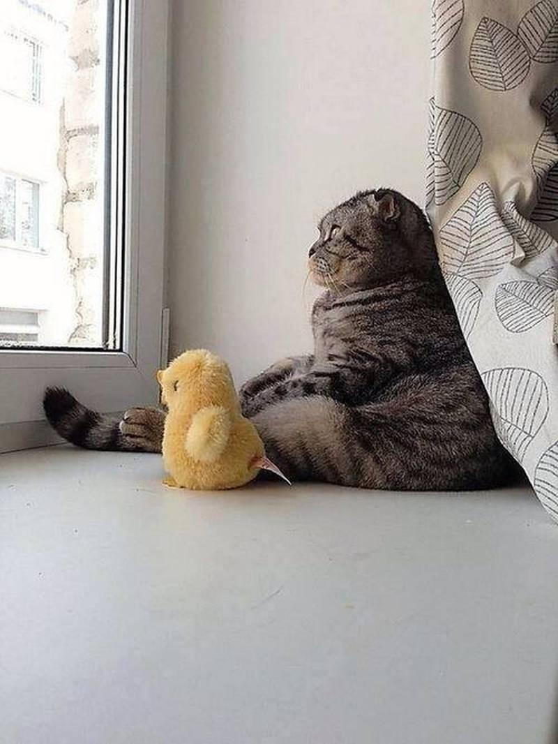 poze pisici (202)