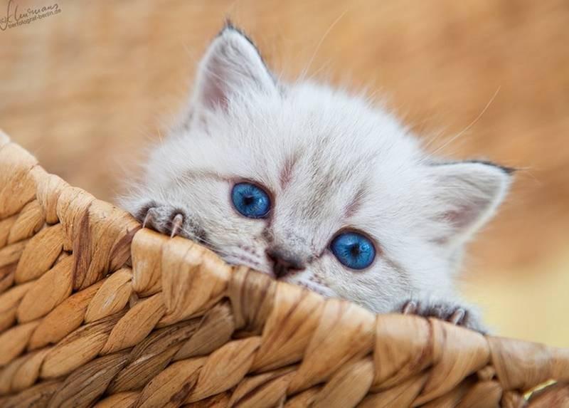 poze pisici (203)