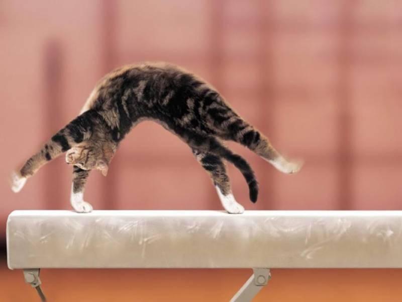 poze pisici (204)