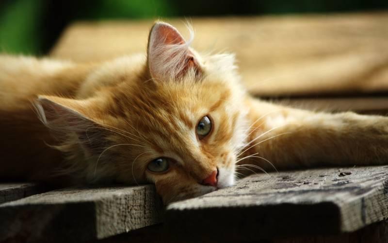 poze pisici (21)