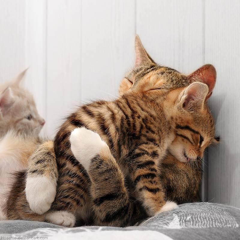 poze pisici (210)