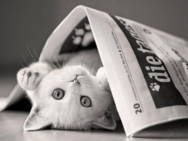 poze pisici (23)