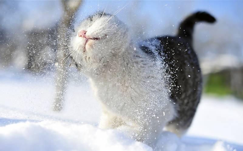 poze pisici (26)