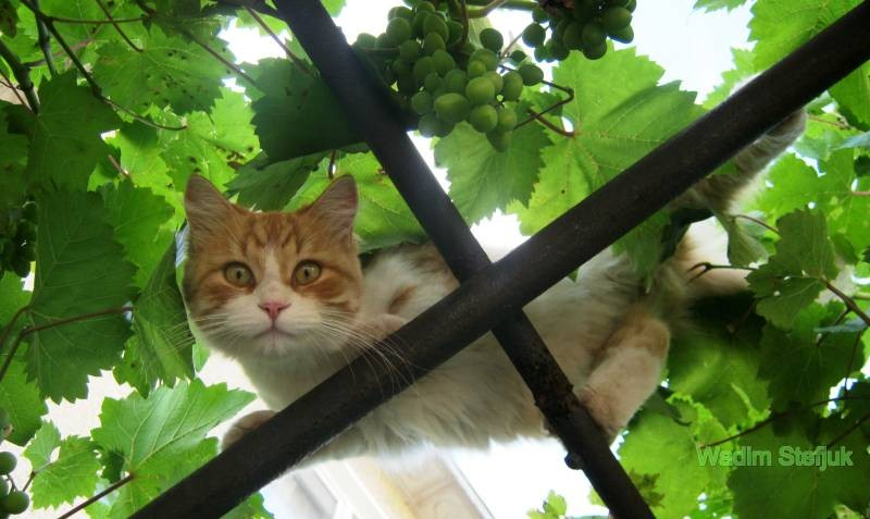 poze pisici (28)