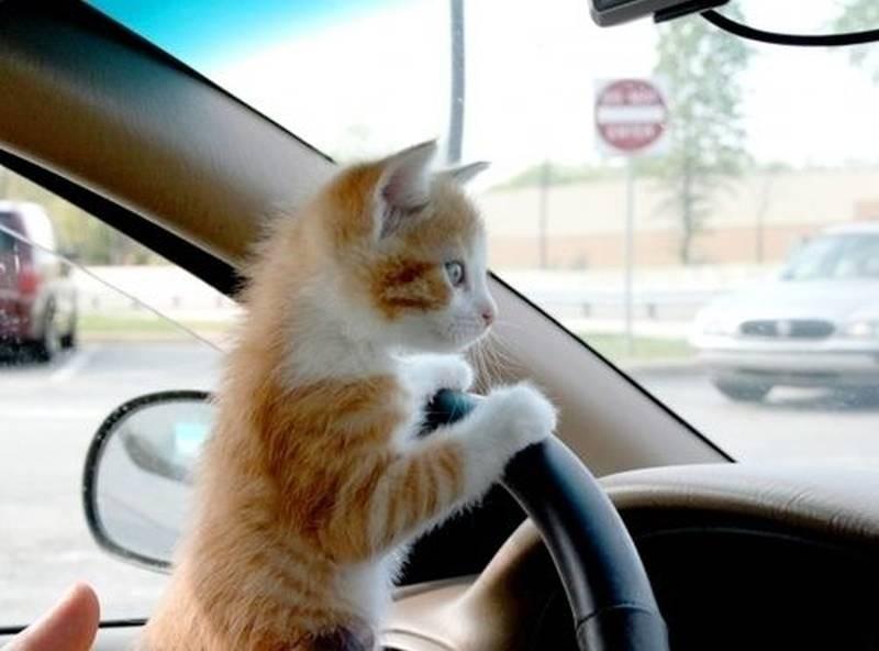 poze pisici (2a)