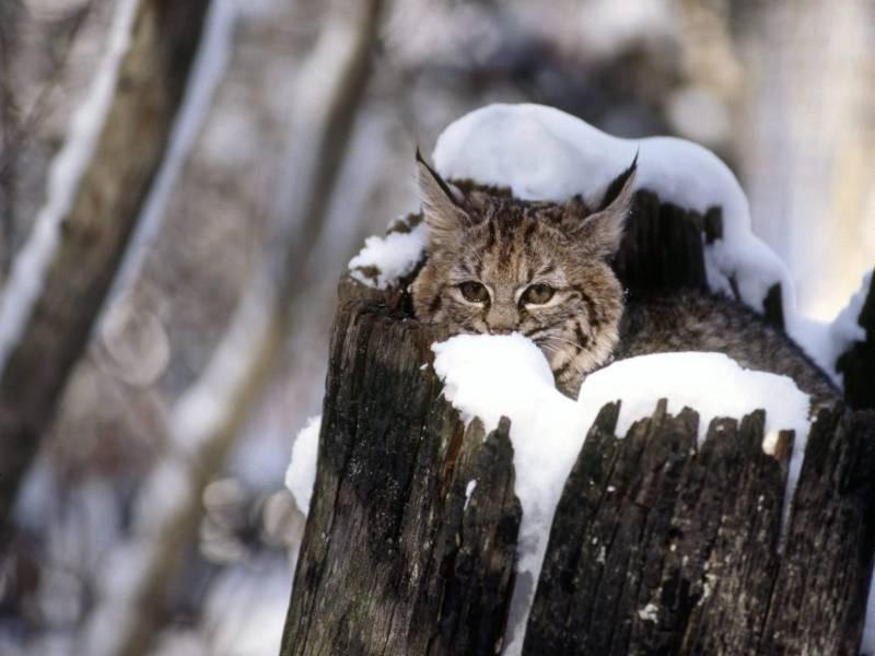poze pisici (3)