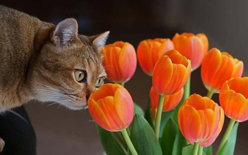 poze pisici (31)