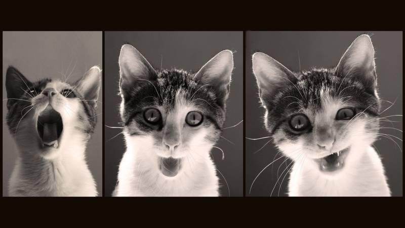 poze pisici (33)
