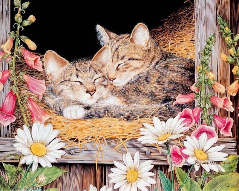 poze pisici (34)