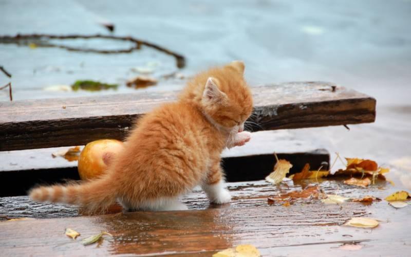 poze pisici (35)