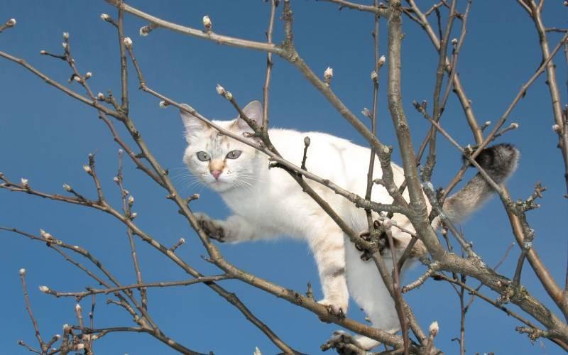 poze pisici (36)
