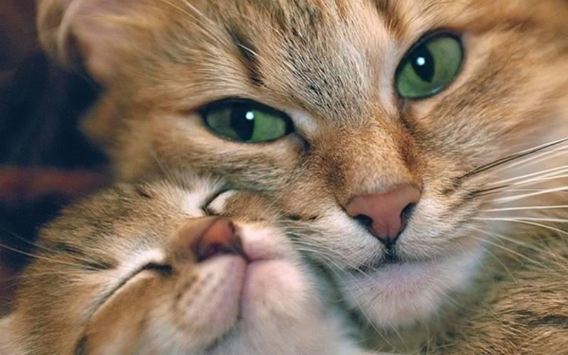 poze pisici (37)