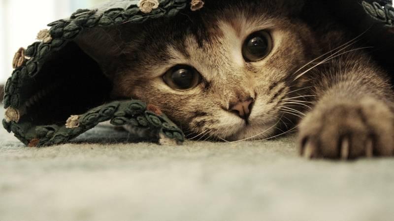 poze pisici (40)