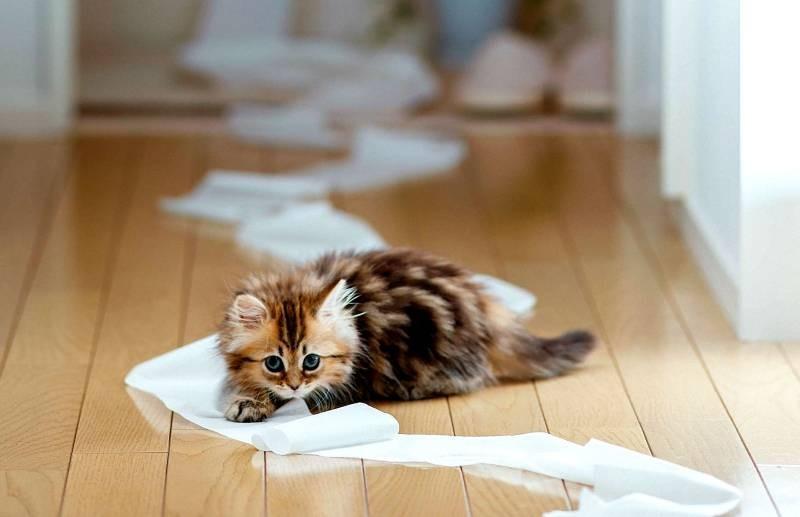 poze pisici (41)