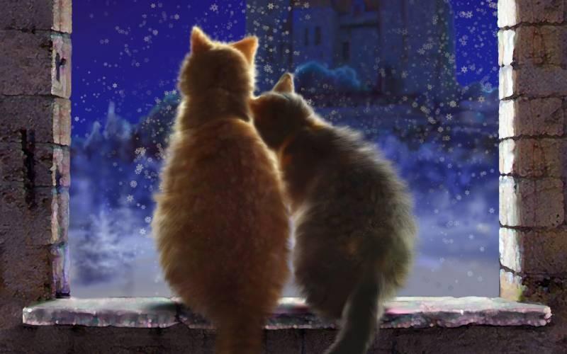 poze pisici (42)