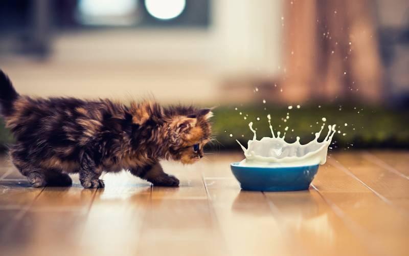 poze pisici (43)