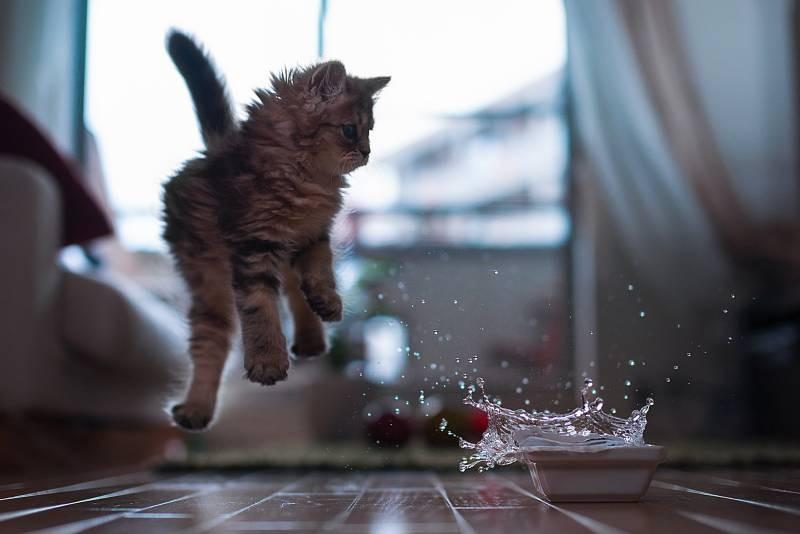 poze pisici (44)