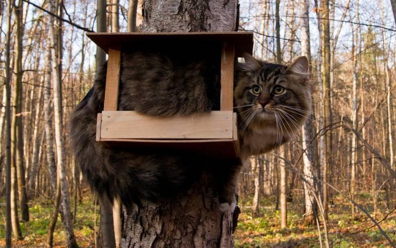 poze pisici (45)