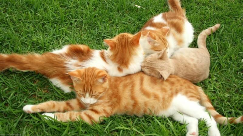 poze pisici (46)