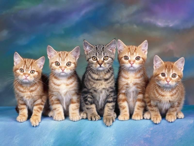 poze pisici (47)