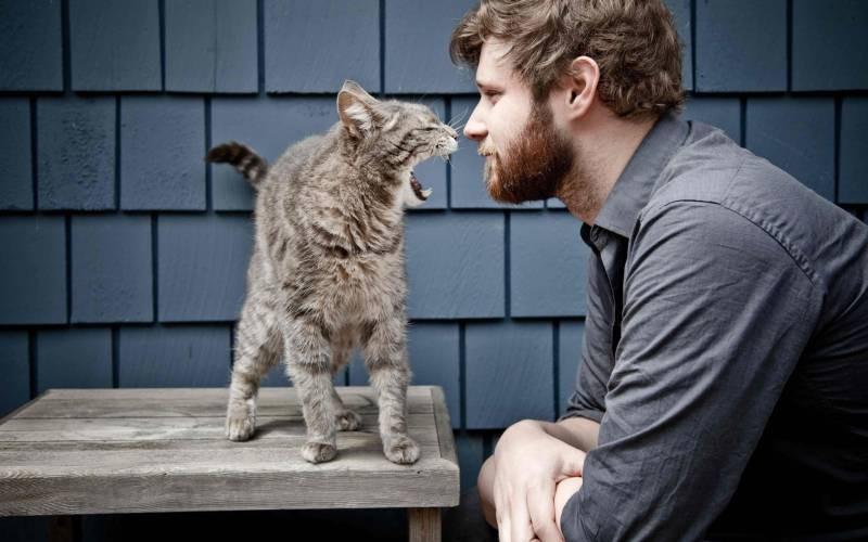 poze pisici (48)