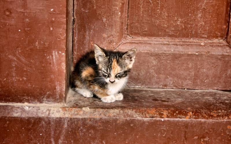 poze pisici (49)