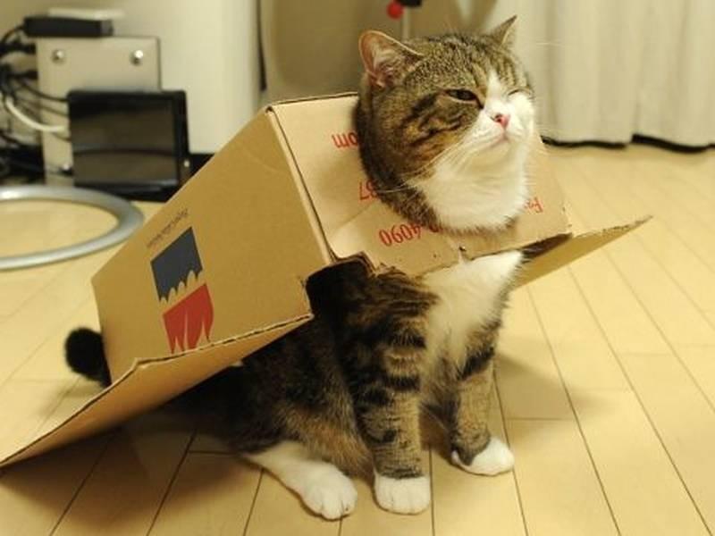 poze pisici (4a)