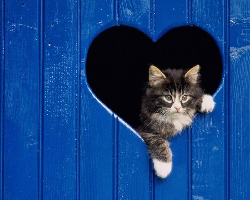 poze pisici (5)