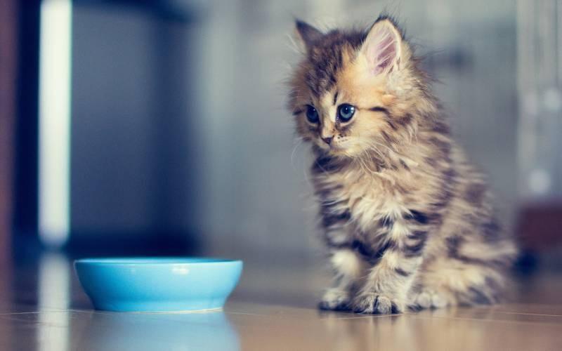 poze pisici (50)