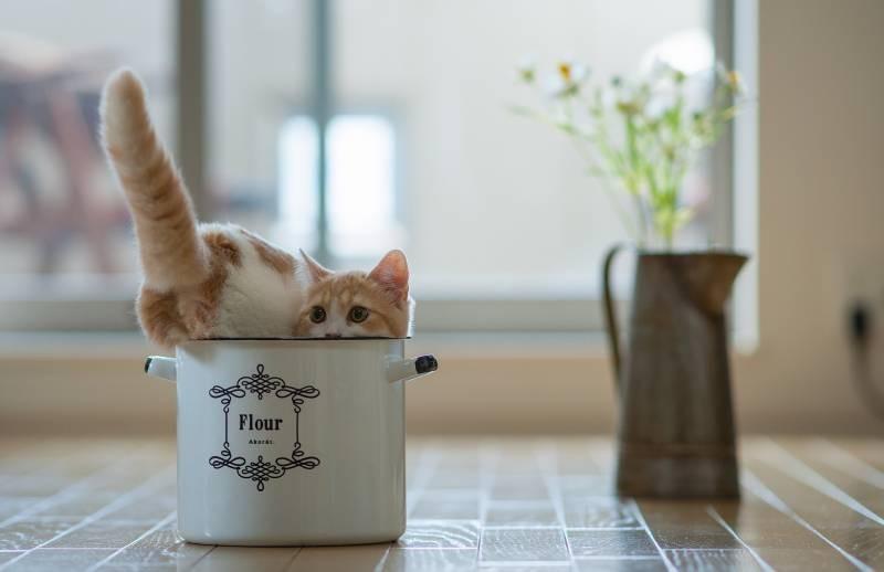 poze pisici (51)