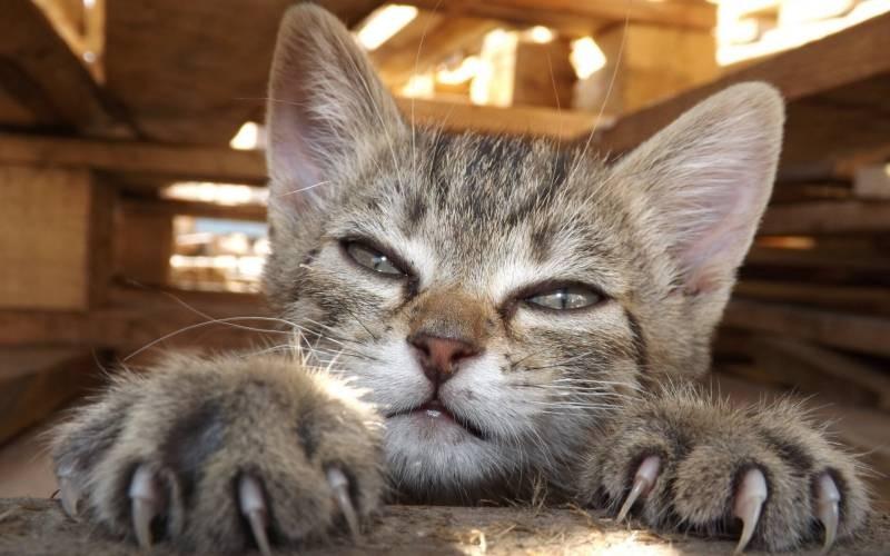 poze pisici (53)